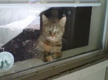 Pookie, the sweetest little girl, waiting for her daddy to get home.