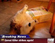 KILLER IN ACTION!