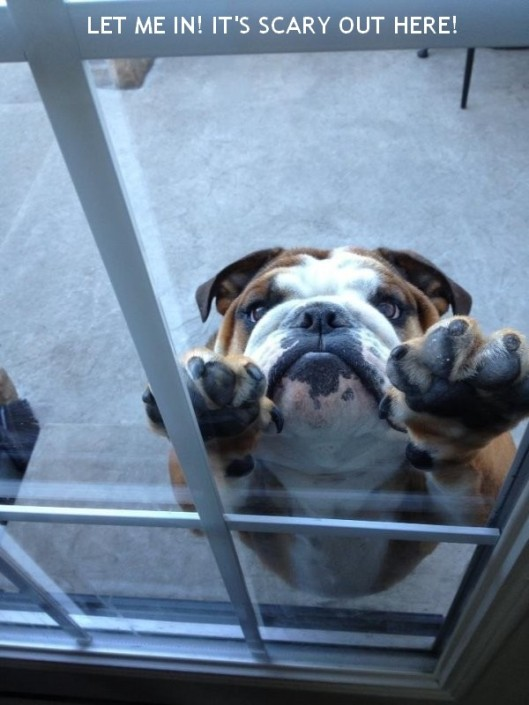 LET ME IN! LET ME IN! It's scary out here!